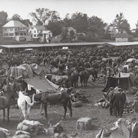 10th U.S. Cavalry making camp at the Northampton fair grounds